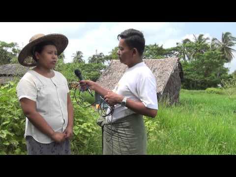 Farming & Livelihoods (Dedaye Township)