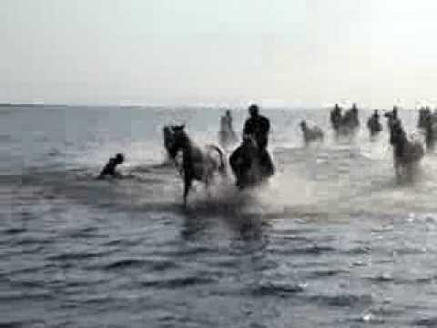 galop dans la mer avec des chevaux camarguais sur la plage en camargue youtube. Black Bedroom Furniture Sets. Home Design Ideas