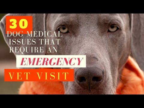 30 Dog Medical Issues that Require An Emergency Vet Visit