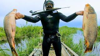 Попал на ход сазана ЁКЛМН Подводная охота на сазана в Сибири Рыбалка на сазана 2021 Рыбалка 2021