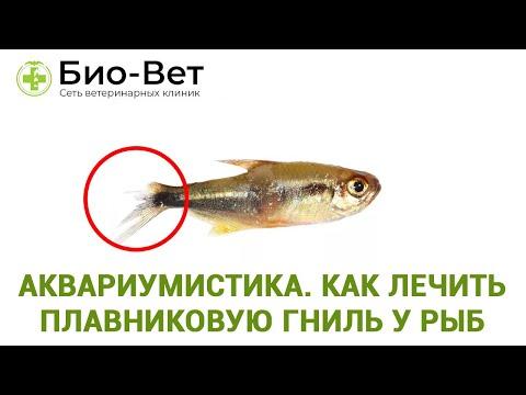 Вопрос: Какие виды аквариумных рыб наиболее подвержены болезням?