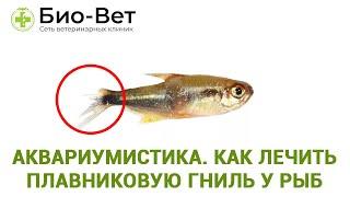 Аквариумистика  как лечить плавниковую гниль у рыб. Ветеринарная клиника Био-Вет.