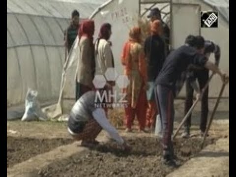 India News - Government revives organic plant cultivation in India's Jammu and Kashmir