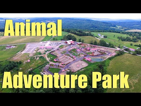 Animal Adventure Park - Harpursville, NY - Tajiri The Giraffe, April te Giraffe & Oliver the Giraffe