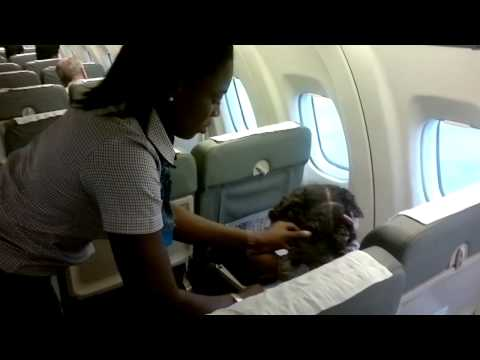 Best service ever by a Nigerian air stewardess_free hairdressing at 30,000ft.mp4