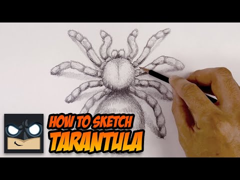 How To Draw A Spider   Tarantula Sketch Tutorial thumbnail