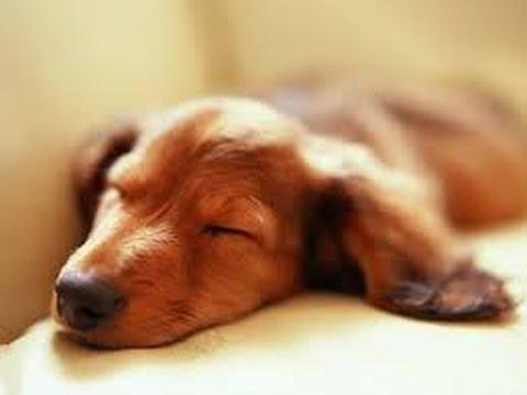 Musica Rilassante per Animali Musica per far dormire i Cani, Musica che calma i nostri amici pelosi
