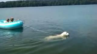 Pies ratuje dzieci na pontonie.