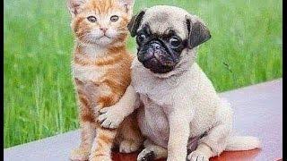 Кошки, собаки и другие 4 ● Приколы с животными осень 2014 ● Funny animals ● Cute Cats & Dogs ● Compi