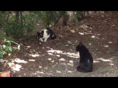Two stupid cats. They found a mouse and don't know what to do :)