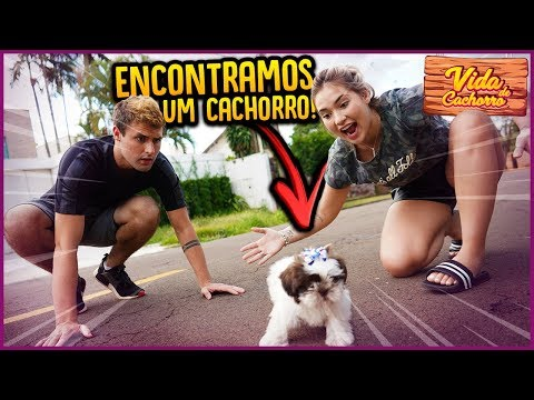 NOSSO NOVO CACHORRO!! ( CACHORRO ABANDONADO )  - VIDA DE CACHORRO #1 [ REZENDE EVIL ]