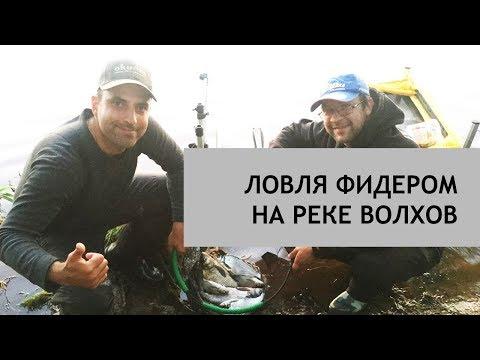 Ловля фидером (донкой) на реке Волхов