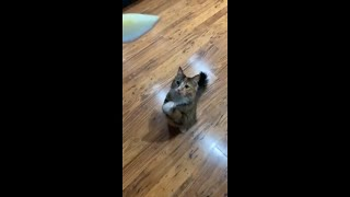 Owner Tell Cat to Pray as Trick for Treats and She Does