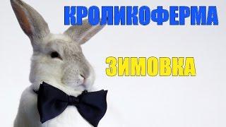 Кроликоферма  Разведение кроликов(Вот и начало становиться все на свои места. Снял очередное видео про свое хозяйство. Пускай это небольшая..., 2016-01-29T18:34:54.000Z)