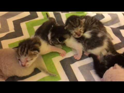 Scope's Kittens' Genders!