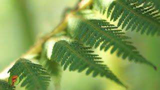 Qué plantas sembrar para proteger las fuentes de agua - TvAgro por Juan Gonzalo Angel