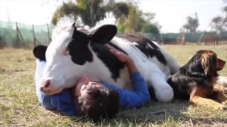 WE ALL LOVE ANIMALS - animal compilation - animal love - Love animals! Graphic Content