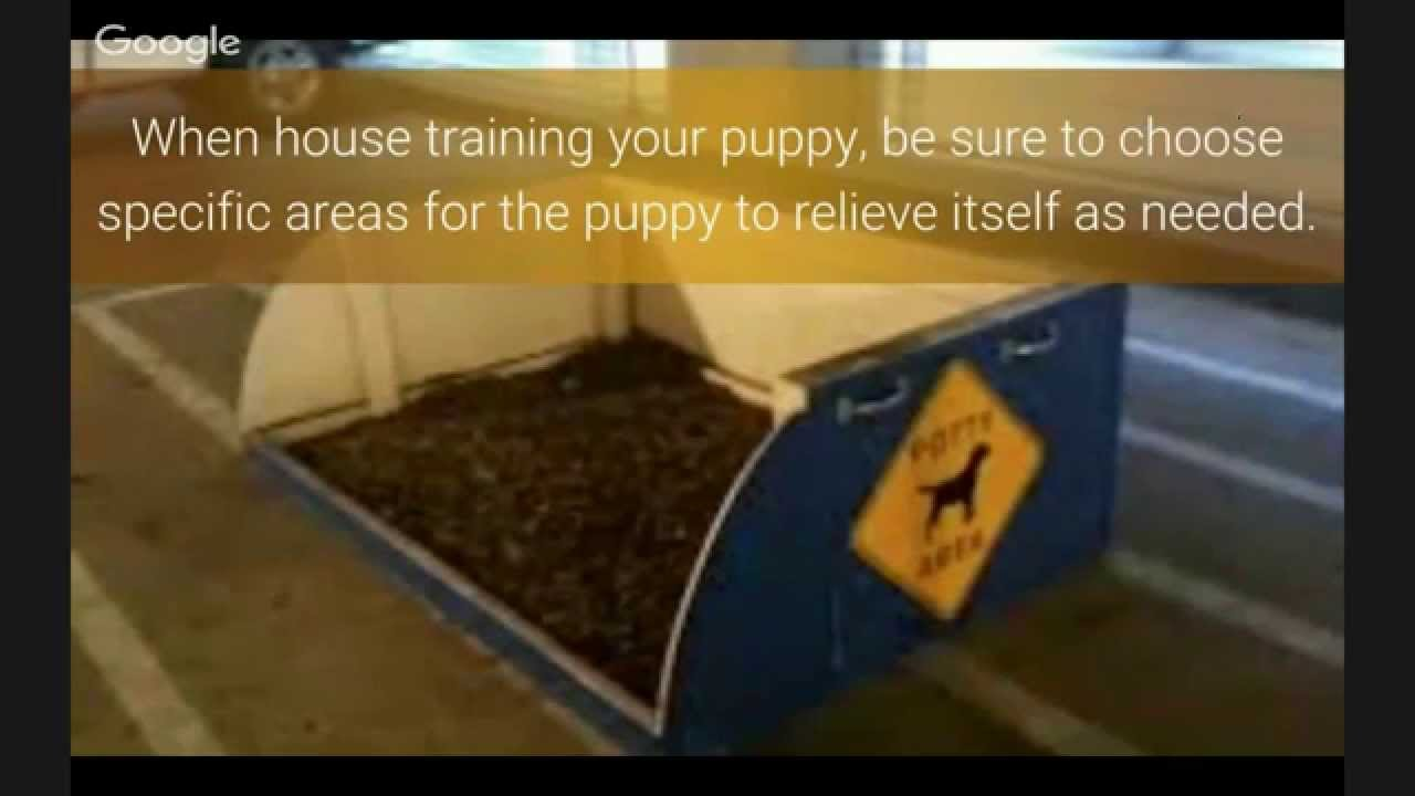 how to get dog pee smell out of carpet youtube. Black Bedroom Furniture Sets. Home Design Ideas