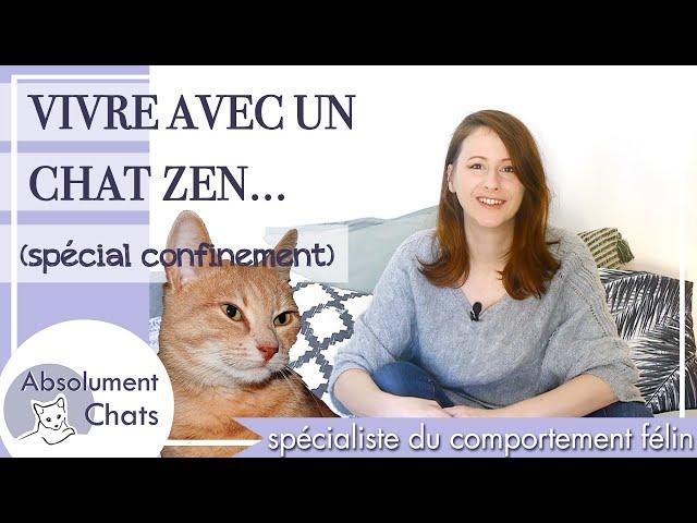 vivre avec un chat zen - spécial confinement corona virus