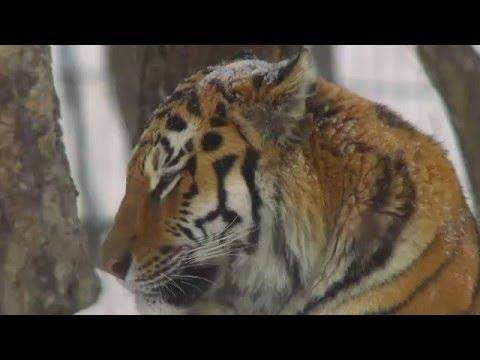 Река Бикин под Новый год (снято по заказу WWF)