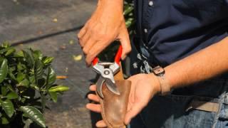 How to Make Gardenia Fuller : Garden Savvy