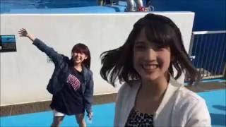 【新潟案内12】マリンピア日本海 「NGT48」にも登場する水族館。動画(4...