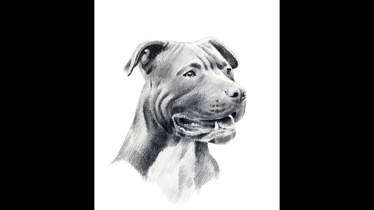 This is a photo of Superb Drawing Of Dogs Faces