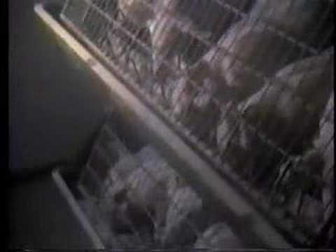 Trailer do filme Terráqueos