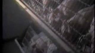 Earthlings Trailer