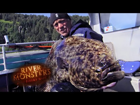 Jeremy Reels In A Mammoth Halibut! | HALIBUT | River Monsters