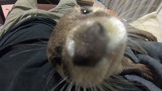 A Big typhoon has come and Aty's river is... [Otter life Day 131] 大きな台風がやってきて、アティの川は・・・