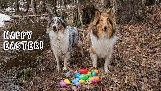 Doggy Easter Egg Hunt!