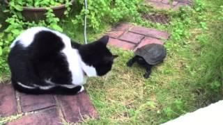 相変わらず猫のホルン好きの亀です.