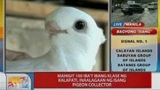 UB: Mahigit 100 iba't ibang klase ng kal...