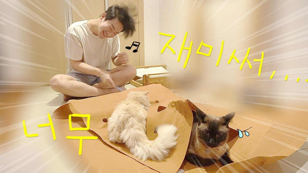 고양이 키우는 여자한테 장가와서 고생 많네요