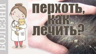Почему появляется перхоть у собак и кошек? Советы ветеринара