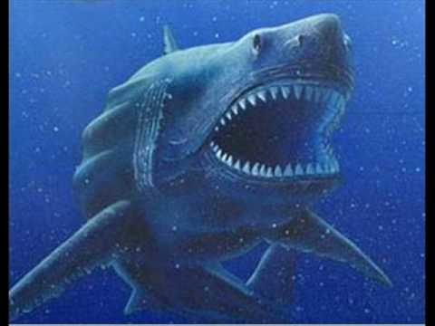 Megalodon-Prehistoric Shark - YouTube