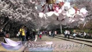 [Jinhae Cherry Blossom Festival] 2011 진해 군항제