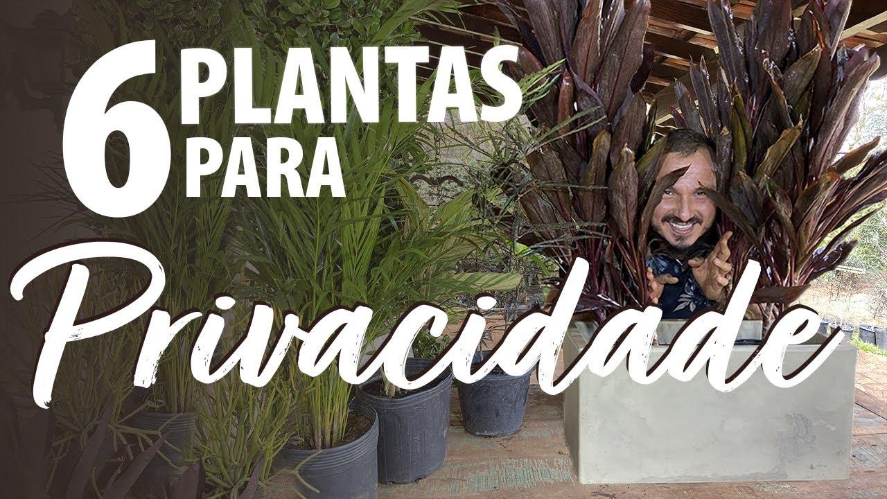 6 PLANTAS PARA PRIVACIDADE