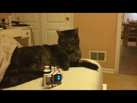 1 month cozmo, application options, explorer mode. My cat love this robot)))