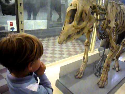 Надежда Толоконникова Зоологический Музей Видео