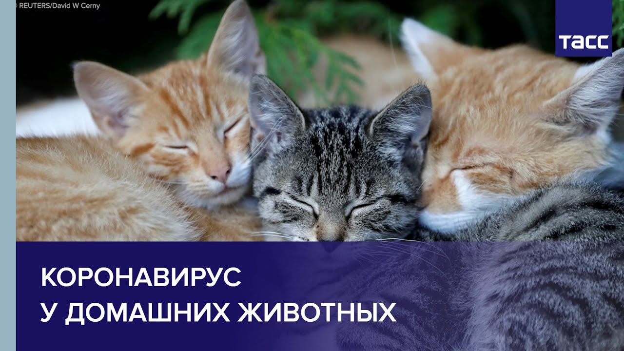 Коронавирус у домашних животных. Как уберечь питомца от инфекции