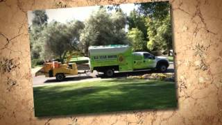 Expert Tree Care Services- All Year Round Trees Phoenix, Arizona