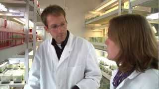 Jenny asks: How does Agrobacterium-mediated gene transfer work?