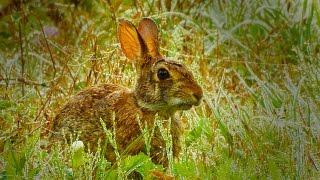 Rabbit Food | Postcard