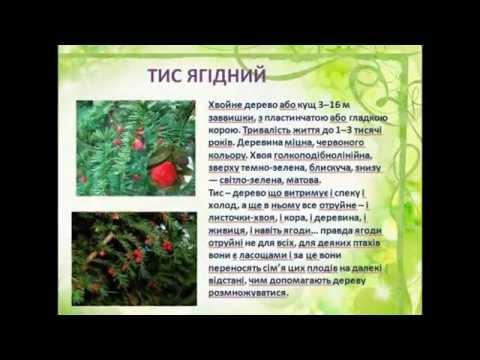 Отруйні ягоди