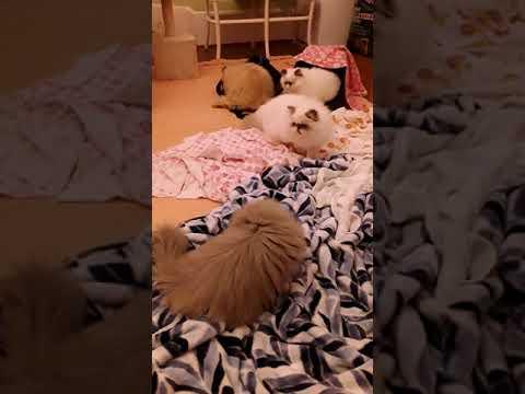 Oh Boy ... Kitten Slumber Party