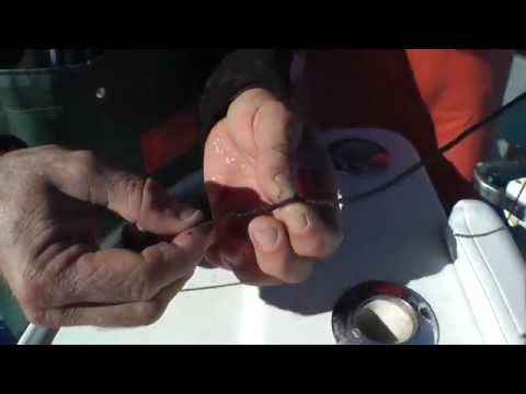 Giant Bluefin Tuna Fishing Rig With Andy Moyes In The Spread
