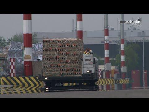Start je baan op Schiphol: Cargo & Platform Medewerker