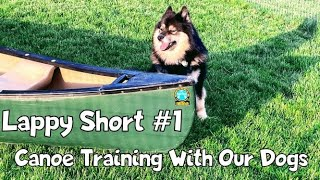 Canoe Training With Our Finnish Lapphund Dogs.  First Time in a Canoe with Steak! Lappy Short #1